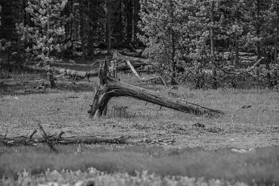 Yellowstone-NP-252
