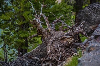 Yellowstone-NP-273