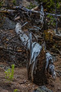 Yellowstone-NP-269