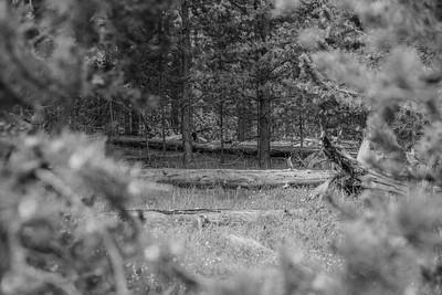Yellowstone-NP-248