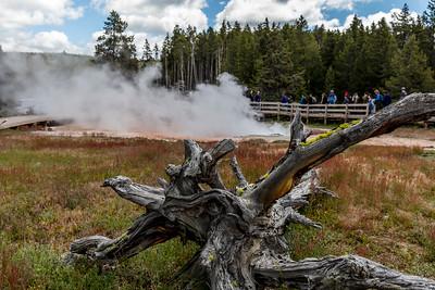 Yellowstone-NP-113