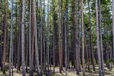 Yellowstone-NP-117