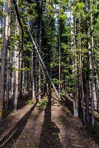 Yellowstone-NP-191
