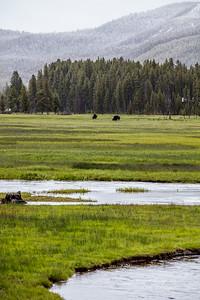 Yellowstone-NP-054