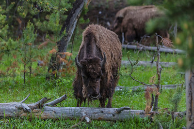 Yellowstone-NP-010