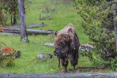 Yellowstone-NP-016