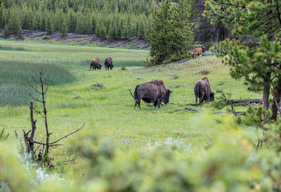 Yellowstone-NP-039