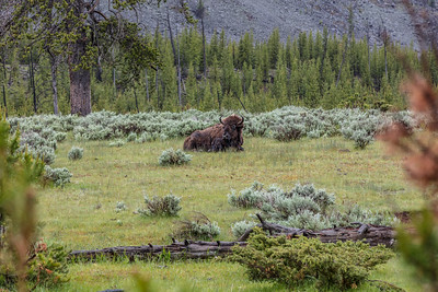 Yellowstone-NP-026