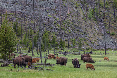 Yellowstone-NP-021