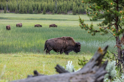 Yellowstone-NP-037