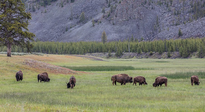 Yellowstone-NP-024