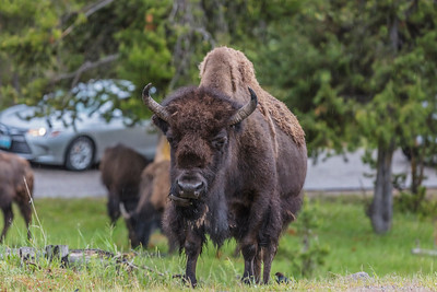 Yellowstone-NP-019