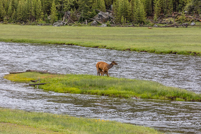 Yellowstone-NP-040