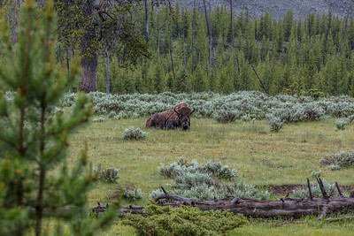 Yellowstone-NP-022