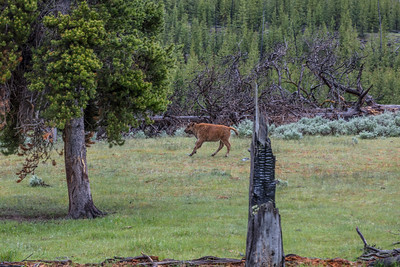 Yellowstone-NP-031