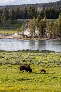 Yellowstone-NP-217