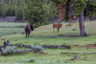 Yellowstone-NP-028