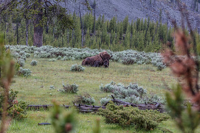 Yellowstone-NP-029