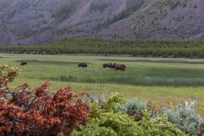 Yellowstone-NP-033