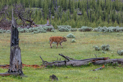 Yellowstone-NP-030