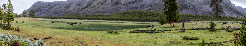 Yellowstone-NP-032