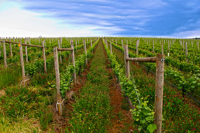Mothers Day Wines Tasting Tour -