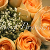 Top view of yellow rose flowers - a color image