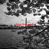 Wide view of Washington Monument in Washington, DC - a black-and-white infrared image