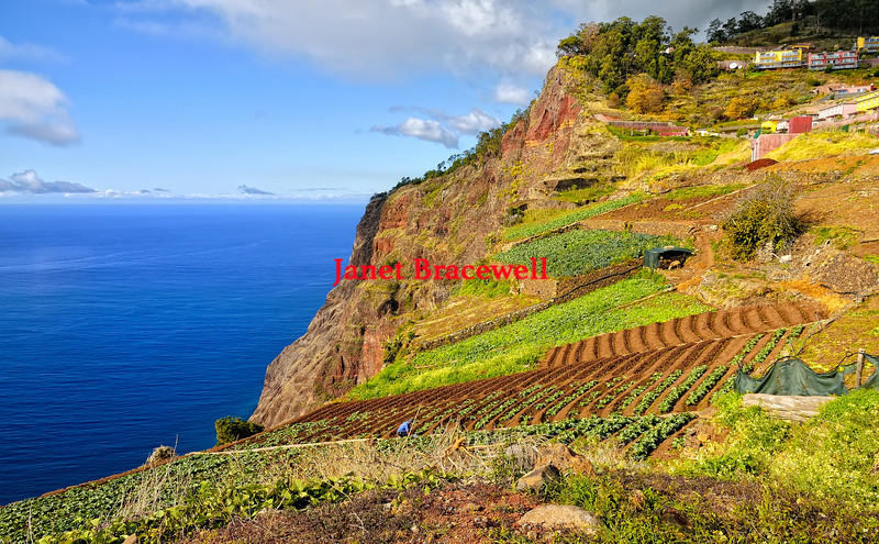 Vineyards on the side of a cliff on the island of Madeira - a color image