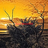 Sunrise at Willis Wharf on Virginia's Eastern Shore - a false-color infrared image