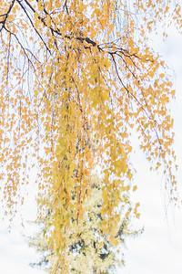 fall-9