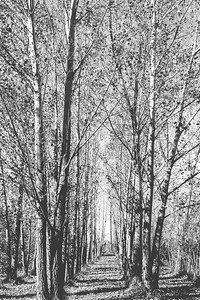 Fall Trees-2