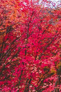 Fall-8