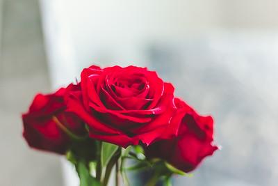 Roses-7