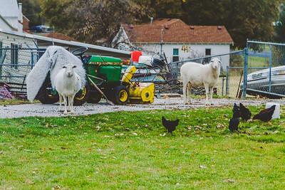 farm yard-3