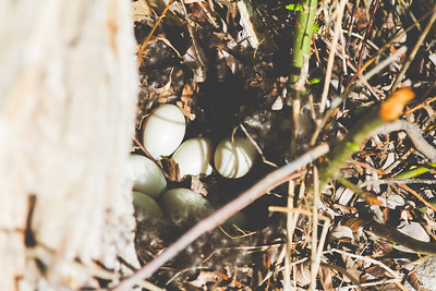 Duck Eggs-131