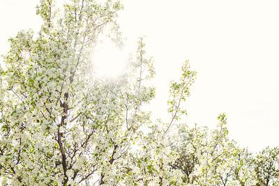 Flower Tree-1