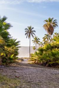 D5 Las Palms (12)