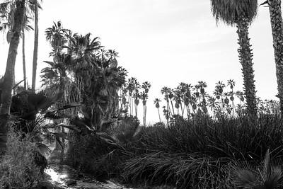D5 Las Palms (9)