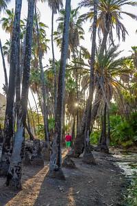 D5 Las Palms (2)