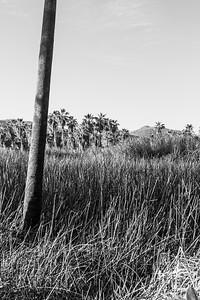 D5 Las Palms (11)