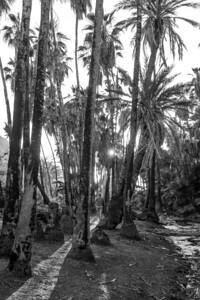 D5 Las Palms (3)