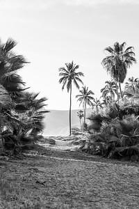 D5 Las Palms (13)