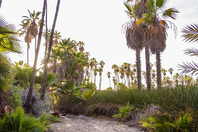D5 Las Palms (6)