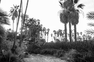D5 Las Palms (7)
