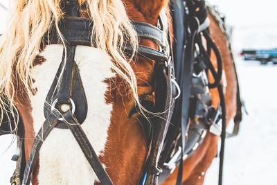 Horse Print-7