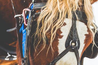 Horse Print-5
