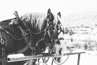 Horse Print-4