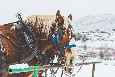 Horse Print-3