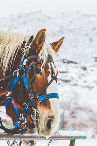 Horse Print-1